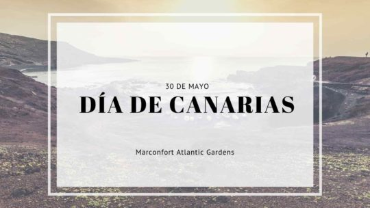 We celebrate Canarian Day! 🌴