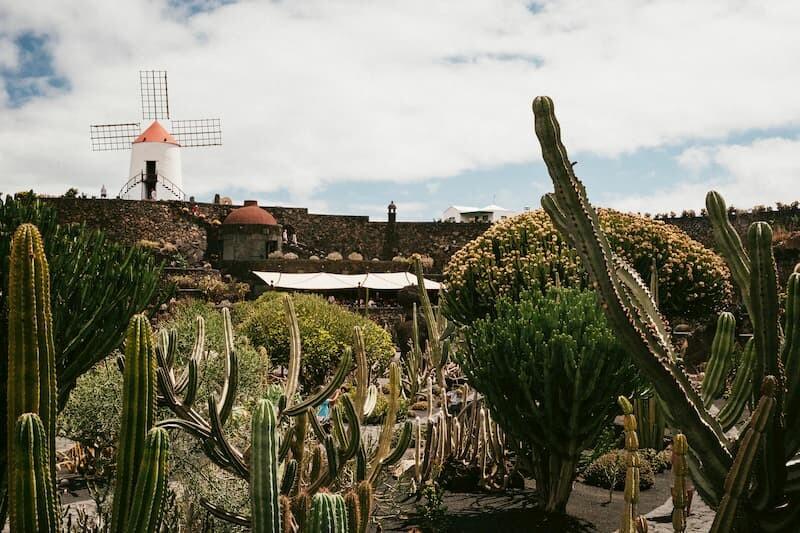 Media Pensión-Turismo en Lanzarote-Casa de Cactus